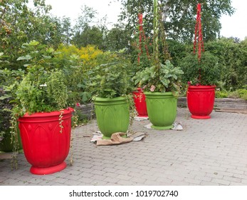 Colorful Planters in urban park