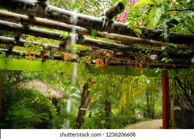 Colorful plants growing on bamboo pergola under tropical rain in Thailand.