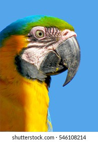 Colorful plumage of a Macaw against blue sky