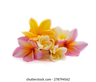 colorful plumeria flower isolated on white background