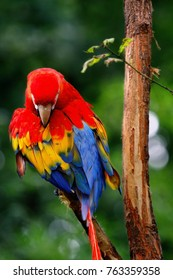Colorful portrait of Amazon red macaw parrot against jungle. Side view of wild parrot head on green background. Wildlife and rainforest exotic tropical birds as popular pet breeds