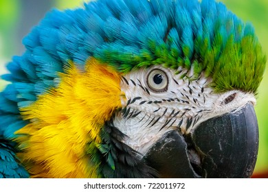 Colorful portrait of a parrot on a background
