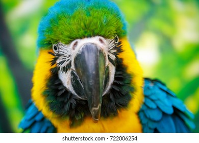 Colorful portrait of a parrot on a green background