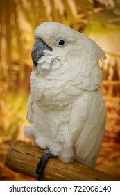 Colorful portrait of a parrot on a yellow background