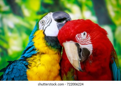 Colorful portrait of parrots on a green background