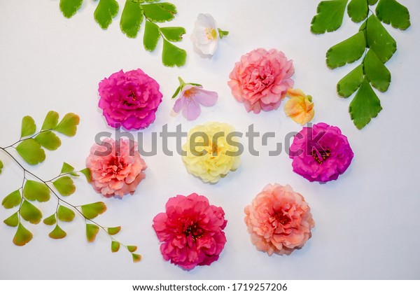 colorful-portulacasutra-bombay-flowers-c