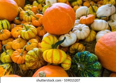 Colorful pumpkin at Jim Thompson farm, Thailand