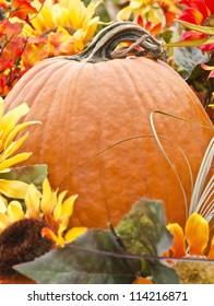 colorful pumpkin representing harvest and fall season