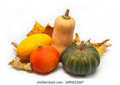 Colorful pumpkin and squash, Red Kuri, Kabocha, Butternut, Spaghetti