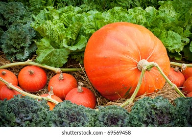 Colorful pumpkins collection on the market