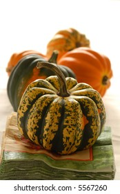 Colorful pumpkins and gourds in an autumn setting bathed in natural light