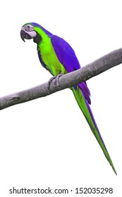 purple macaw images stock photos vectors shutterstock