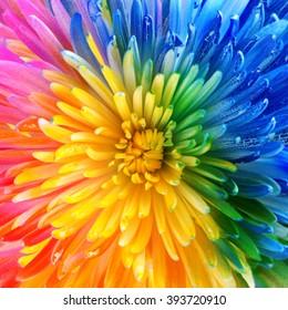 Colorful rainbow flower brackground