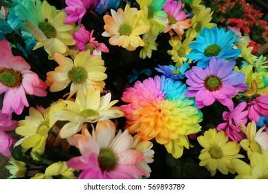 Colorful rainbow flowers.