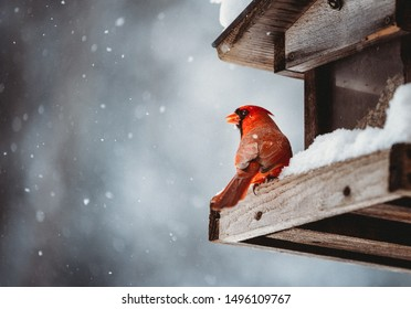 Colorful red cardinal perched on a snow covered feeder sheltered by a wooden roof gazing out through negative space filled with falling snowflakes on a cold winter day.