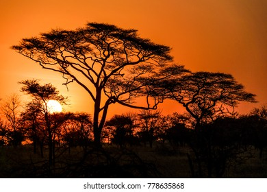 bunter roter Sonnenuntergang im afrikanischen Safari-Nationalpark serengeti in Tansania in Tansania mit der Sonneniris auf dem Bild und einigen epischen Bäumen im Zentrum des Bildes