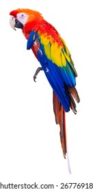 Colorful red parrot macaw on white background with clipping path