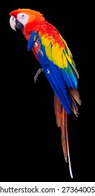 Colorful red parrot macaw on black background with clipping path