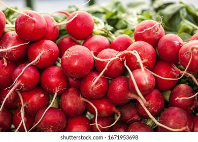 Colorful red radish in a bunch