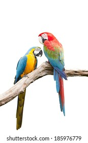 Colorful Red-and-green Macaw birdon white background (green-winged macaw)
