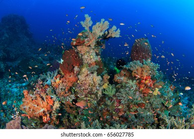 Colorful reef with soft corals