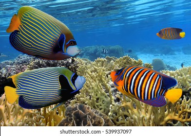 Colorful reef underwater landscape with fishes and corals.