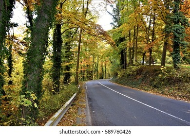 Colorful of road in autumn