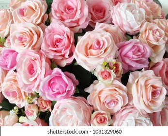 Colorful rose flower background