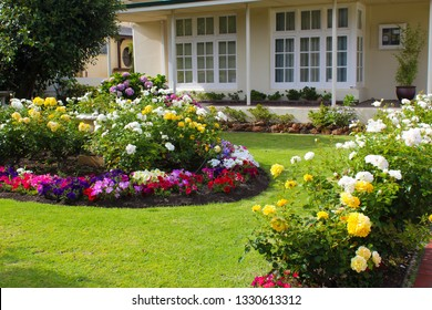 Colorful  rose flower bed with mixed bulbs and petunia flowers  blooming  adds color to the garden in late spring and early summer.