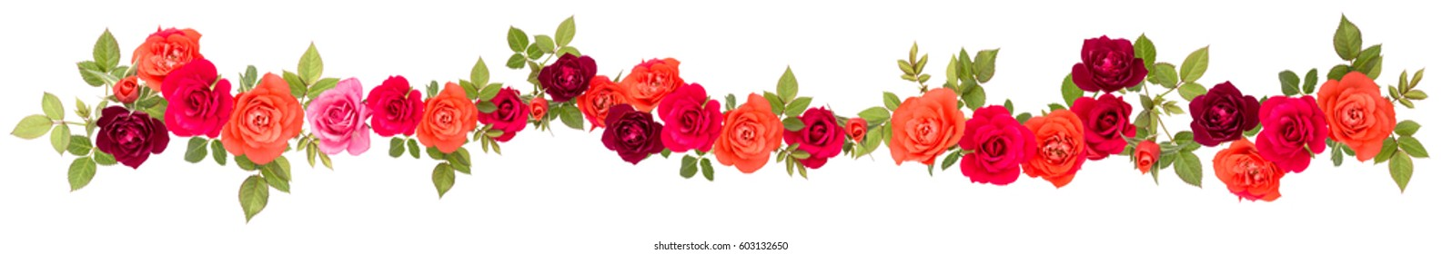 colorful rose flower bouquet border isolated on white background cutout