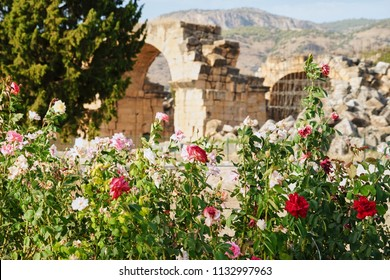 Colorful Rose Garden and Ancient Ruin of Hierapolis (Holy City) over Pamukkale Mountain in Turkey, Top Tourist Destination