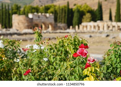 Colorful Rose Garden and Blurred Foreground of Ancient Ruin of Hierapolis (Holy City) over Pamukkale Mountain in Turkey, Top Tourist Destination