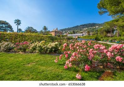 "Colorful rose garden ""Il Roseto"" in Genoa (Genova) Nervi, inside Genoa Nervi Groppallo Park, Italy"