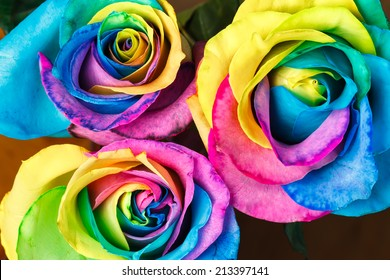 Colorful roses flower background