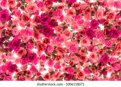 Colorful of roses isolated on white background, Flower background, Valentine 's day.