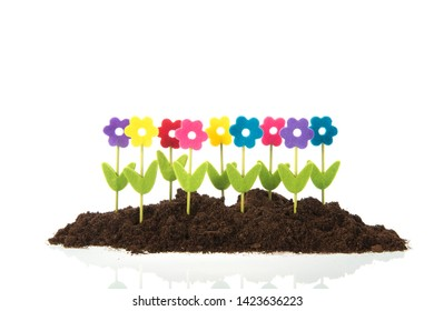 Colorful row flowers in black earth isolated over white background