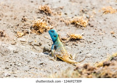 colorful salamander stock photos images photography shutterstock