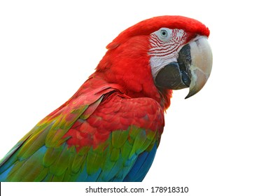 Colorful Scarlet Macaw aviary, side profile, isolated on a white background
