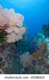 Colorful sea fan reef canyon with soft and hard corals in the Andaman Sea, Indian Ocean, Thailand.