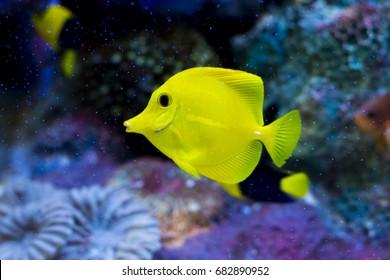 Colorful sea fish,Marine fishes in aquarium