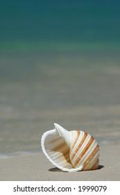 Colorful Seashell on a Sandy Beach
