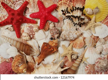 Colorful seashells asortment