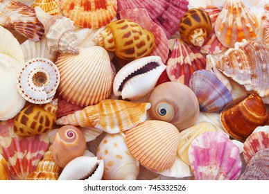 Colorful seashells as background, sea shells collection