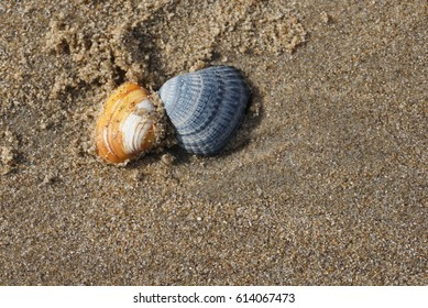 colorful seashells on the beach at Katwijk aan Zee