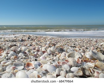 Colorful seashells at sunny Florida beach.