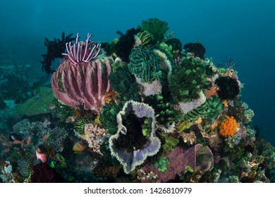 A colorful set of corals and other marine invertebrates grow on a healthy coral reef in Komodo National Park, Indonesia. This tropical region is a popular destination for scuba divers and snorkelers.