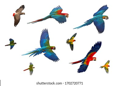 Colorful set of parrot flying isolated on white