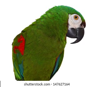 Colorful Severe Macaw