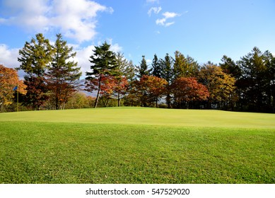 The colorful shades of tree leaves in autumn foliage with bright  green turf as a a foreground and  shady mountains as a background.