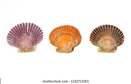 colorful shells isolated on the white background